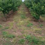 dgfruits orchards